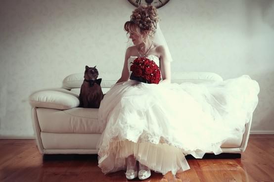 kot na sesji ślubnej