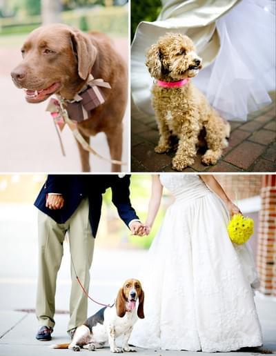 zwierzęta wesele sesja