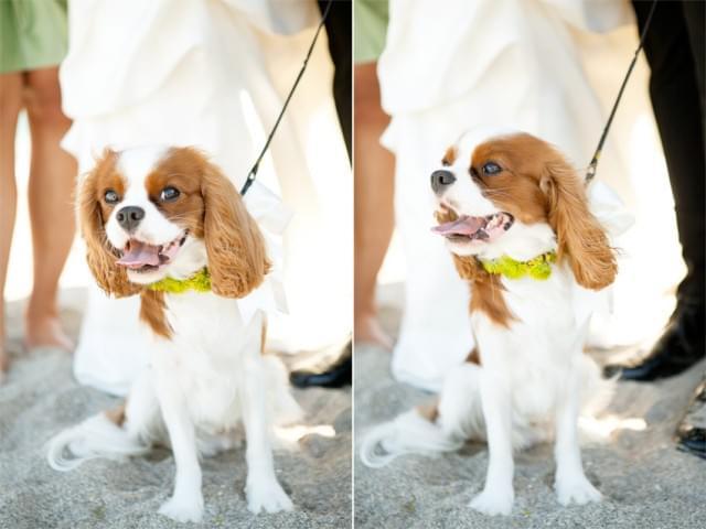 sesja ślubna z psami