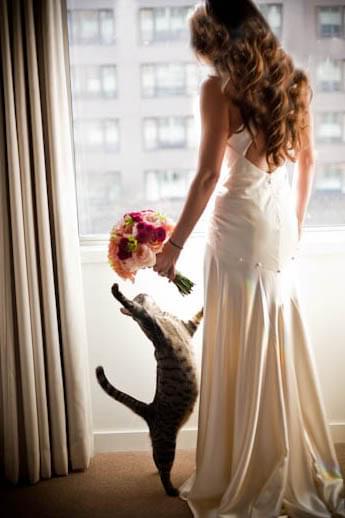 panna młoda z kotem