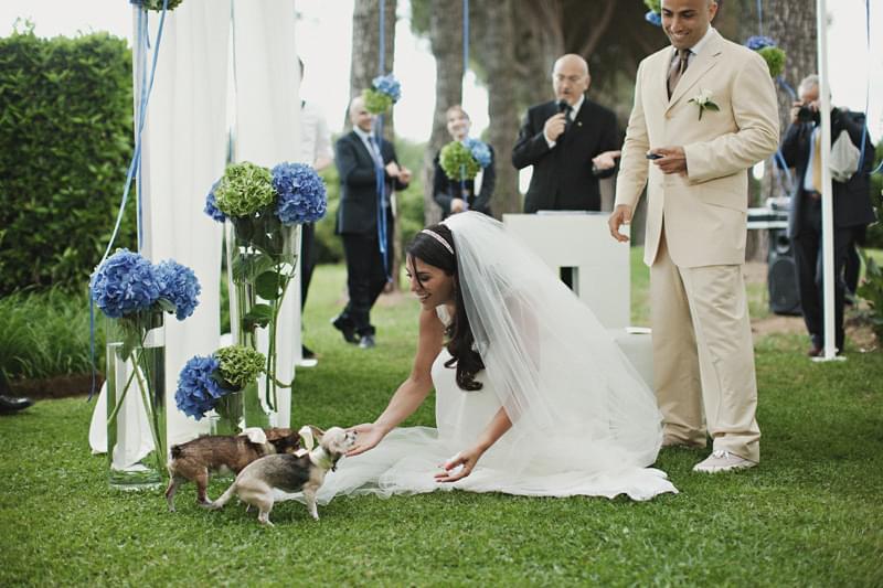 zwierzęta na plenerowym weselu